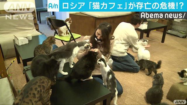 ロシア「猫カフェ」 新法成立で存続の危機!?
