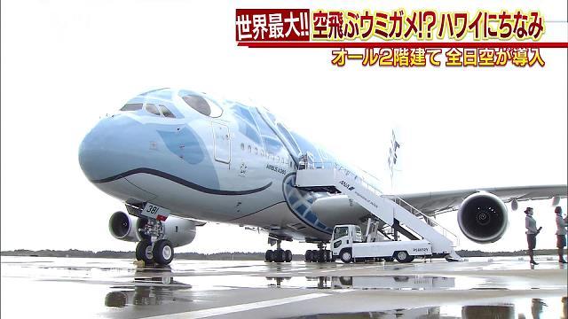 """世界最大の""""ウミガメ""""飛来!日本の航空会社では初"""