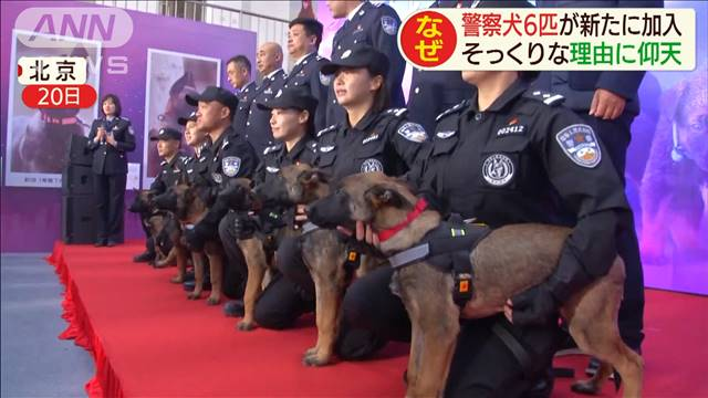 クレバ 警察 犬