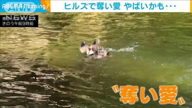 これはやばいカモ!六本木で「奪い愛」大乱闘を激撮の画像