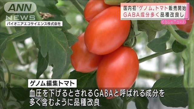 """国内初""""ゲノム""""トマト販売開始 遺伝子操作し改良"""